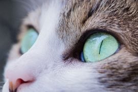Who let the cat in? - image for article by Greg Alder